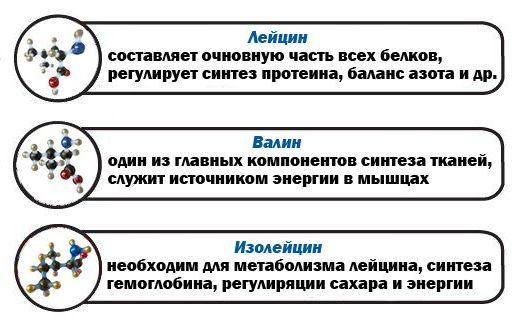 Основной состав BCAA