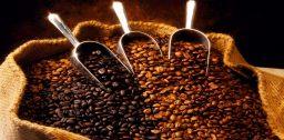 Какое выбрать кофе в зернах